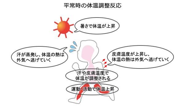 平常時の体温調節反応